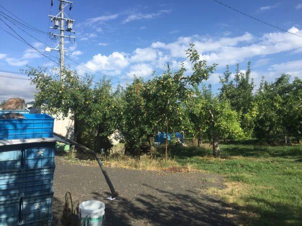 長野の農家見学で感じた日本の農業ビジネス
