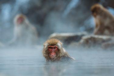 【合計6つ紹介】温泉に関する資格試験をまとめてみた。